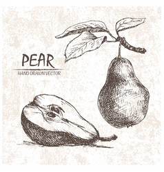 Digital detailed pear hand drawn vector