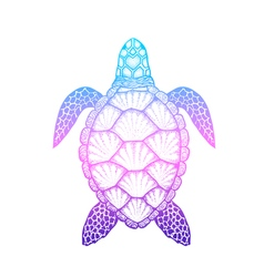 Sea turtle in line art style hand drawn isolated vector