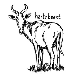 Hartebeest - sketch hand drawn vector