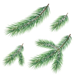 Branches of a Christmas tree vector image vector image