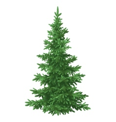 Christmas fir tree isolated vector