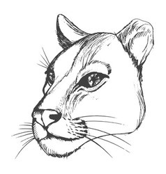 head of lioness vector image vector image