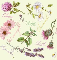 Herbal seamless pattern vector image vector image