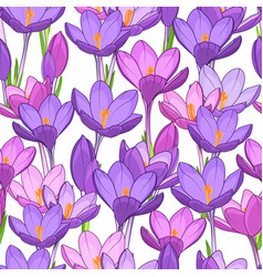 violet crocus spring floral seamless pattern style vector image vector image