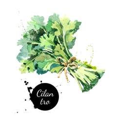 Watercolor hand drawn cilantro bunch isolated eco vector