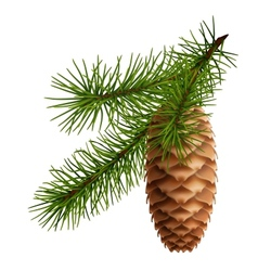 Pine cone with branch vector