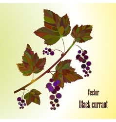 Black currant composition vector image vector image