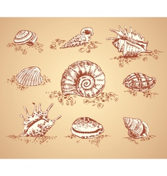 Collection graphic images seashell set vector