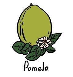Pomelo fruit vector