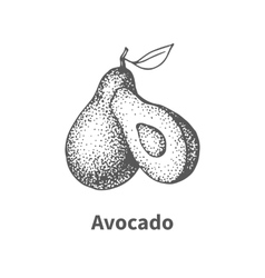 Hand-drawn avocado vector
