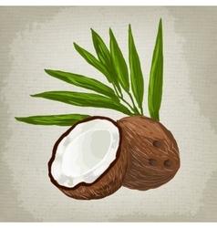 fruit coconut vector image vector image