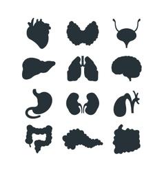 Internal organs silhouette vector