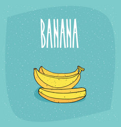isolated ripe and whole bananas fruits vector image