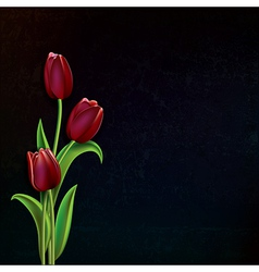 abstract black grunge background with red tulips vector image
