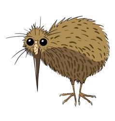 Cartoon image of kiwi bird vector