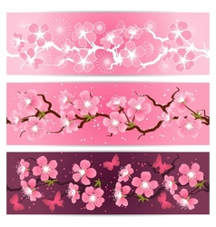 Cherry blossom flowers banner set vector image vector image