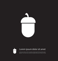 isolated nut icon oak element can be use vector image