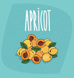 Isolated ripe apricots fruits whole and cut vector