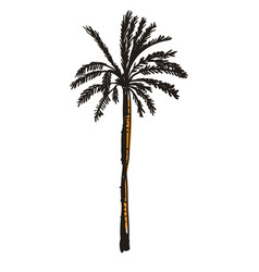 Palm tree hand drawn icon vector