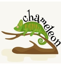 Pet chameleon for home lizard and reptile vector