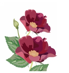 Anemone flowers isolated vector