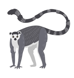 Lemur monkey rare animal vector image