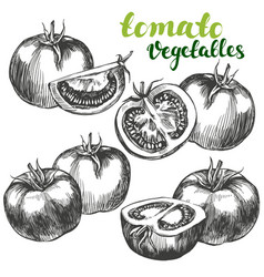 Tomato vegetable set hand drawn vector