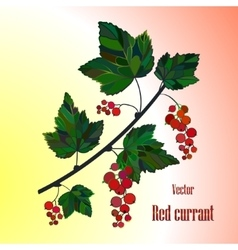 Currant Isolated vector image vector image