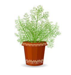 Dill in a flower pot vector