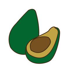 Avocado tropical fruit green vitamins vector