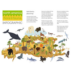 Isometric 3d north america flora and fauna map vector