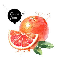 Watercolor hand drawn pink grapefruits isolated vector