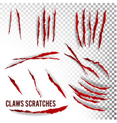 Claws scratches  transparent background vector