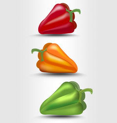 pepper isolated green yellow and red vector image