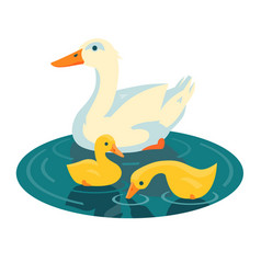 Duck swimming with two ducklings vector