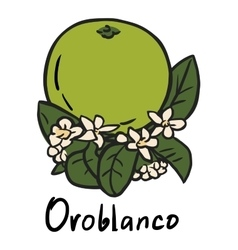 Oroblanco fruit vector