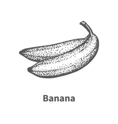 Hand-drawn banana vector