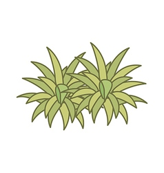 A plant vector image