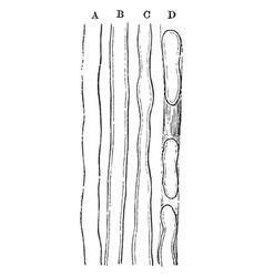 Primitive nerve fibers vintage vector