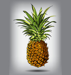 a pineapple isolated on a vector image
