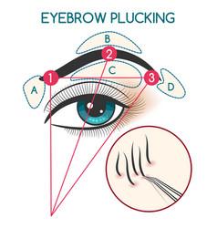Eyebrow plucking vector