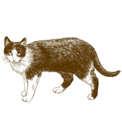 Engraving of cat vector