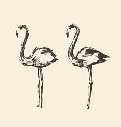 Flamingo hand drawn vector
