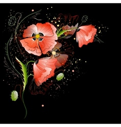 Black background with red poppy flowers vector