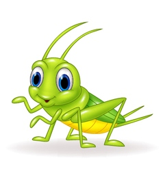 Cartoon cute green cricket isolated vector