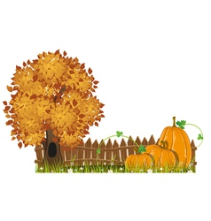 Autumn tree and pumpkins vector
