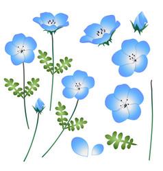 Nemophila baby blue eyes flower vector