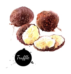 Watercolor hand drawn black truffles isolated eco vector