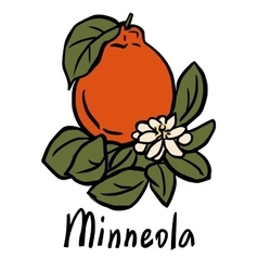 Minneola fruit vector