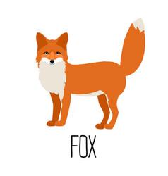 cute cartoon fox isolated vector image vector image